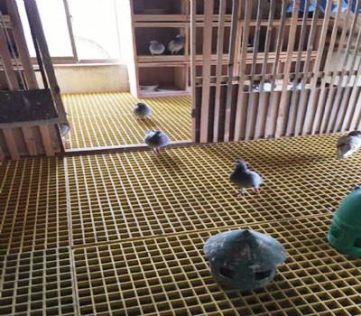 养殖玻璃钢格栅